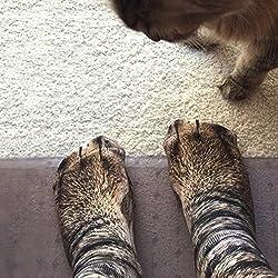 dressfan Animal Socks Unisex Adult Kids 3D Print Paw Socks For Coslpy Costume