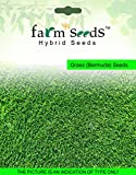 Grass Seeds Review and Comparison