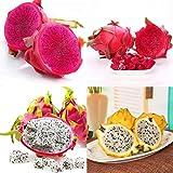Adolenb Jardin- Graines de Pitaya rares, graines de fruits du dragon Bonsai Graines de fruits vivaces pour Balcon, Jardin, Ferme