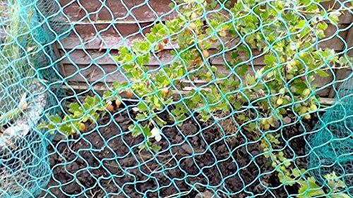 Filet Anti-oiseaux 2 m x 100 m