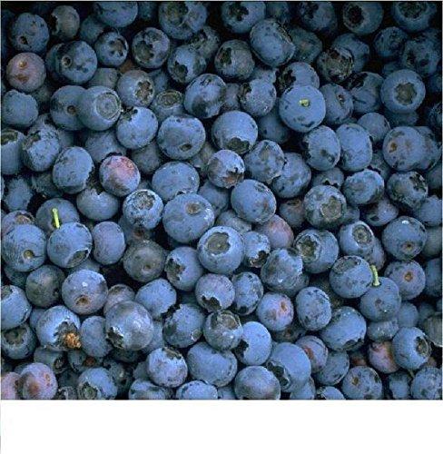 Garten-Heidelbeere Reka, 1 Strauch