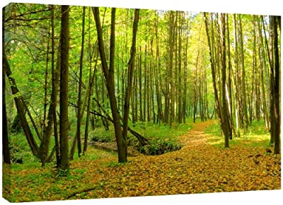 MOOL Large 32 x 22-inch Green Forest Footpath Canvas Wall Art Print Hand Stretched on a Wooden Frame with Giclee Waterproof Varnish Finish Ready to Hang