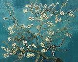 Suntown Pintura por números Marco de madera 40x50cm Pintura de la lona para adultos y niños con pinturas acrílicas y 3 pinceles - Flor de albaricoque
