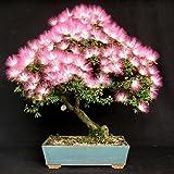 mark8shop 100Garten Seidenbaum Blumensamen Samt Blume Baum Topfpflanzen