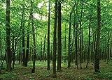 Carta da parati fotografica ftnm2656, motivo: fiabe foresta