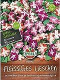 Fleissiges Lieschen, Star Mix