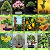 Pinkdose Bonsai Samen: Bonsai Geeignete Pflanzensamen für Garten Border Combo Pinus Roxburghaii, Albizia lebbeck, Eukalyptus