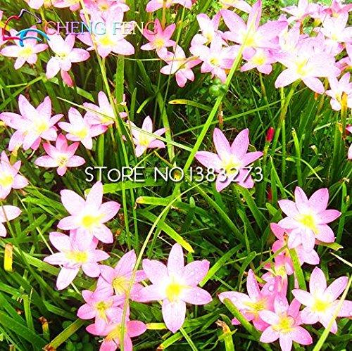 Promotion !!! 100pcs Rarest Allium Lin frais Graines d'ornement Plante vivace Bonsai Pour jardin