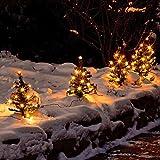 Gärtner Pötschke Weihnachtstannen Lichterglanz, 6er-Set