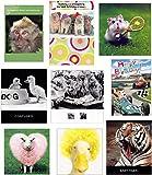 9 Humourous Animal Birthday Cards