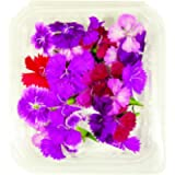 Fiori Commestibili BIOLOGICI - 25 DIANTHUS di COLORI ROSA, ROSSO, VIOLA in vaschetta alimentare di 10 cm x 10 cm x 2 cm…