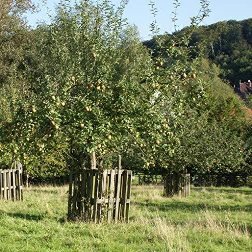 Apfelbaum Hochstamm viele historische Sorten mit 180 cm Stamm wurzelnackt