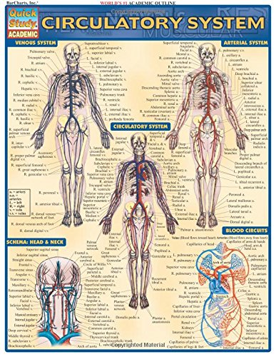 Circulatory System: Reference Guide (Quickstudy: Academic)