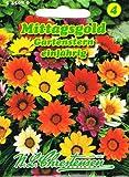 Mittagsgold Gartenstern , einjährig, für Beete, Rabatten, Schalen 'Gazania Hybride' Mittagsblumen
