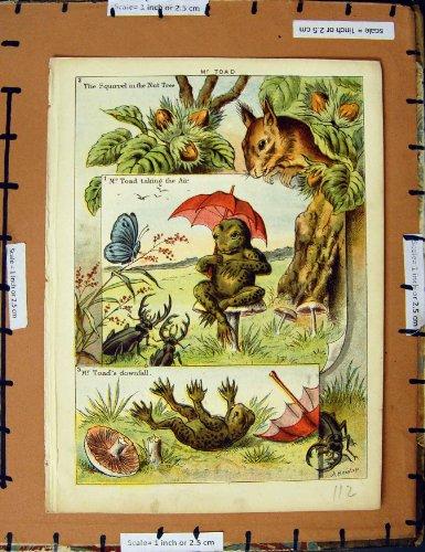 copie-darbre-decrou-de-m-toad-squirrel-de-comptine-c1950