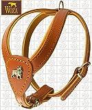 Woza Premium Geschirr FRANZÖSISCHE Bulldogge Vollleder GRÖßE 2,3/47CM Vollleder Cognac RINDNAPPA Cognac GEBUGGT Handmade Harness