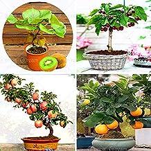 IDEA HIGH Semillas-4 frutas tipo, bonsáis, árboles frutales