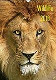 Wildlife 2018 (Wandkalender 2018 DIN A3 hoch): Wildlife-Fotografie (Monatskalender, 14 Seiten ) (CALVENDO Tiere) [Kalender] [Apr 01, 2017] Klingebiel, Jens