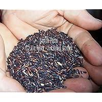 Portal Cool 30 semillas Premium: Semillas prima del arroz Oryza sativa púrpura Negro arroz asiáticas raras de la herencia Gourmet