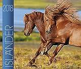 Isländer 2018: Isländische Pferde
