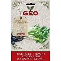 Geo Girasol - Semillas para germinar, 12.7 x 0.7 x 20 cm, color marrón