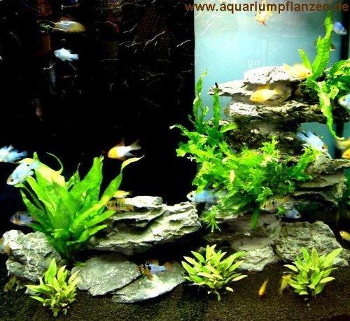 Aquarium Set für 100 l, Pflanzen, Kies, Deko (X)