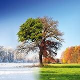 Suchergebnis Auf Amazon De F 252 R Der Baum In Den Vier