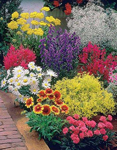 massif-fleuri-facile-8-plantes-vivaces