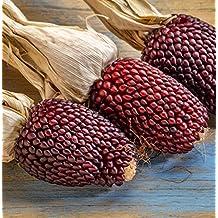 Seedeo® Erdbeermais, Popcornmais (Zea mays japonica) ca.20 Samen BIO