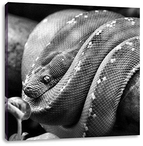 Monocrome, Grüne exotische Schlange, Format: 60x60 auf Leinwand, XXL riesige Bilder fertig gerahmt mit Keilrahmen, Kunstdruck auf Wandbild mit Rahmen, günstiger als Gemälde oder Ölbild, kein Poster oder Plakat (Green Python-tiere Tree)