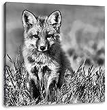 Monocrome, Kleiner Fuchs, Format: 70x70 auf Leinwand, XXL riesige Bilder fertig gerahmt mit Keilrahmen, Kunstdruck auf Wandbild mit Rahmen, günstiger als Gemälde oder Ölbild, kein Poster oder Plakat