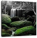 schöner Regenwald in Thailand B&W Detail, Format: 60x60 auf Leinwand, XXL riesige Bilder fertig gerahmt mit Keilrahmen, Kunstdruck auf Wandbild mit Rahmen, günstiger als Gemälde oder Ölbild, kein Poster oder Plakat