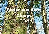 Bilder aus dem Chaco in Paraguay (Wandkalender 2019 DIN A3 quer): Vor mehr als 80 Jahren besiedelten die Mennoniten dieses unwegsame Buschgebiet und ... 14 Seiten ) (CALVENDO Natur)