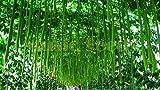 1bag = 20pcs asciugamano semi di zucca cinese esotico semi di melone di cetriolo regalo bonsai fioriera fai da te per la casa e il giardino