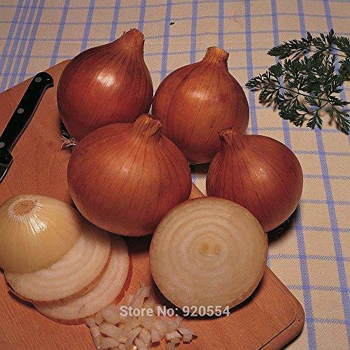 50pcs / lot jaune « Champion Bedfordshire » oignon, les graines de Allium cepa bonsaï Maison & Jardin Plantes Bricolage Livraison gratuite # Y21