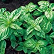Classic Italian Basil Seeds - 1050 Seeds (3 x 350 Per Pack) - Organic Herb Seeds