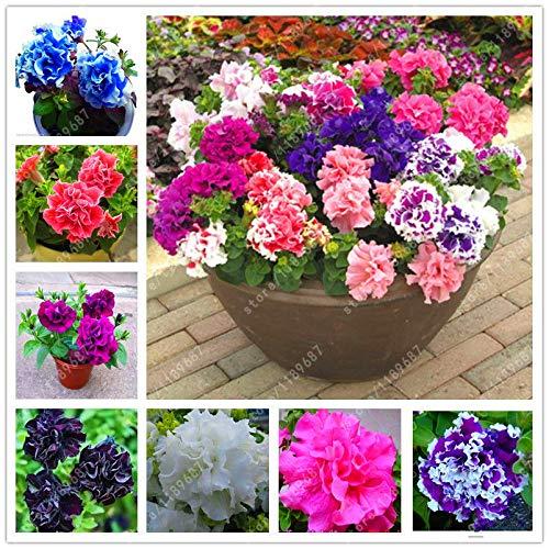 Go Garden Mix: 100 Pcs/sac Petunia graines, pétales de double Pétunia Graines de fleurs, vivaces Bonsai