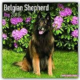 Belgian Shepherd Dog - Belgischer Schäferhund 2018: Original Avonside-Kalender [Mehrsprachig] [Kalender] (Wall-Kalender)