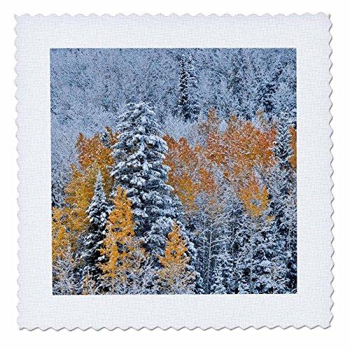 3dRose qs_278820_1 Aspen Grove mit Herbstschnee, Keeblerpass, Rocky Mountains, Colorado Quilt Square, 10 x 10 cm -