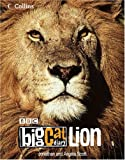 BIG CAT DIARY LION HB