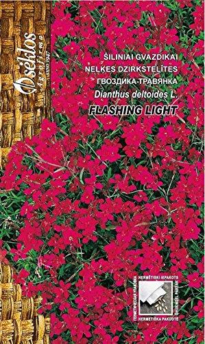 Seklos LT PINK MAIDEN FLASHING LIGHT - 1500 SEEDS