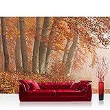 Liwwing FTVLPP-0255-350x245 - Vellón fotografía de fondo 350x245 cm - cima! premium plus fondo de pantalla! murales de papel tapiz mural foto mural de la pared xxl pintado pared wanddeko árboles del bosque, la naturaleza -. no 255
