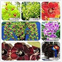 Ricoverato d'urgenza 2015 nuovo arrivo Happy Farm Media Semillas de Flores Bonsai colore misto 20 semi / pacchetto Orchid semi Cicada Cymbidium