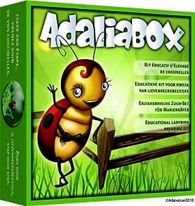 Kit d'elevage pour coccinelle adaliabox