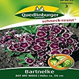 Bartnelken Rot mit Weiß | Höhe ca. 50 cm (Dianthus barbatus) Juni – August im 2. Jahr-