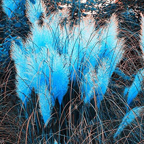 Gräser winterhart-mehrjährig, Beetpflanze