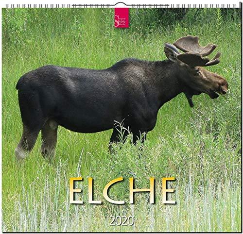 Elche: Original Stürtz-Kalender 2020 - Mittelformat-Kalender 33 x 31 cm