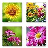 Blumen Blüten - Set D schwebend, 4-teiliges Bilder-Set je Teil 29x29cm, Seidenmatte moderne Optik auf Forex, UV-stabil, wasserfest, Kunstdruck für Büro, Wohnzimmer, XXL Deko Bild