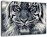 Tiger Schwarz/Weiß Format:100x70 cm Bild auf Leinwand bespannt, riesige XXL Bilder komplett und fertig gerahmt mit Keilrahmen, Kunstdruck auf Wand Bild mit Rahmen, günstiger als Gemälde oder Bild, kein Poster oder Plakat