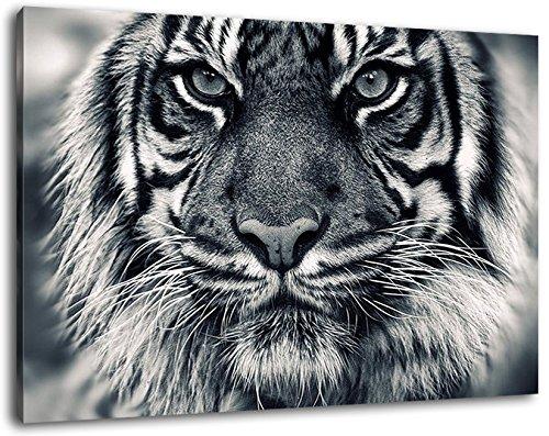 Tiger Schwarz/Weiß Format:100x70 cm Bild auf Leinwand bespannt, riesige XXL Bilder komplett und fertig gerahmt mit Keilrahmen, Kunstdruck auf Wand Bild mit Rahmen, günstiger als Gemälde oder Bild, kein Poster oder Plakat -
